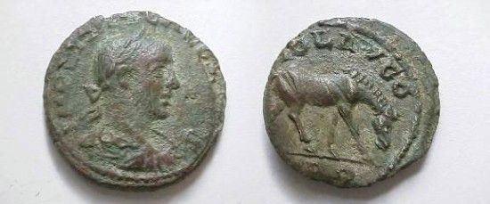 Gallienus Æ 20mm of Alexandria Troas.  COL AVG, TRO below, horse grazing right.
