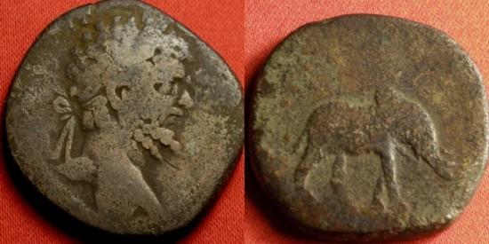SEPTIMIUS SEVERUS AE sestertius. Rome, 196 AD. MVNIFICENTIA AVG, Elephant walking. Rare.